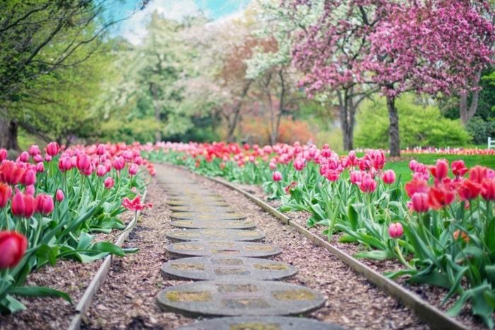 Pathway Flowers