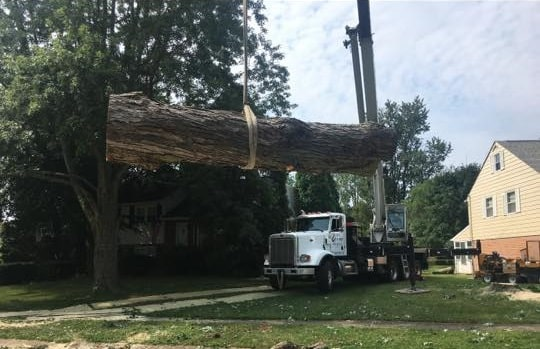 Tree Removal Truck
